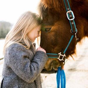 Hippodrome - horse Racing Winter Set