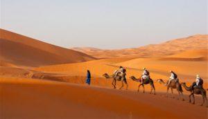 Sahara Desert & camels